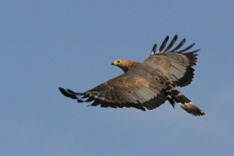 African Bird Of Prey Sanctuary Midlands South Africa