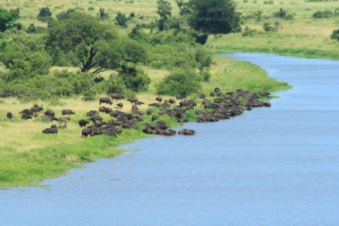 Restaurants In Kruger National Park