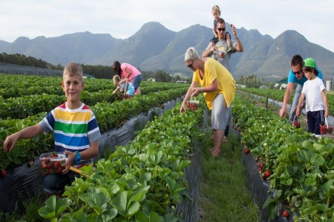 Redberry Farm George South Africa
