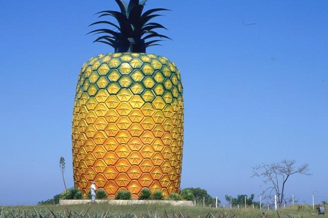 Pineapple Tours Tab