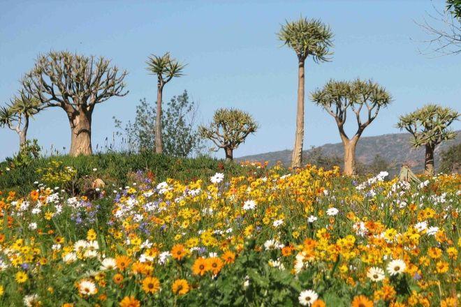 Clanwilliam Wild Flower Show Clanwilliam South Africa