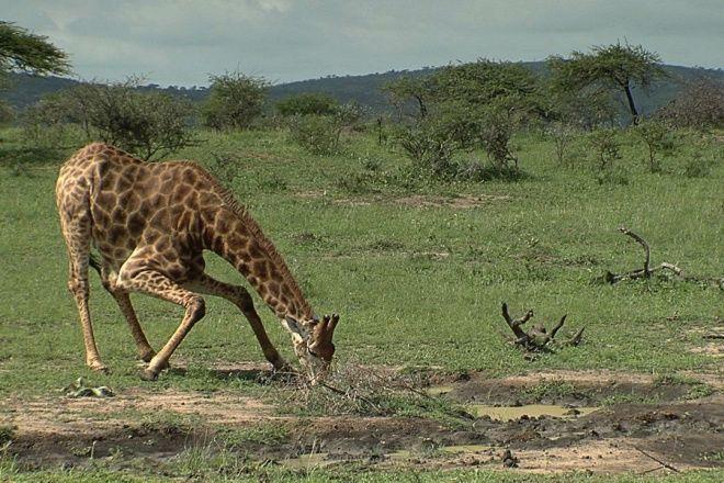 hluhluwe umfolozi game reserve hluhluwe south africa