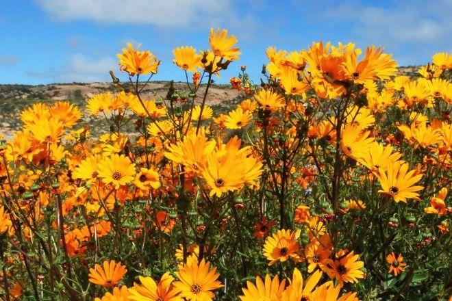 Springbok - Where To Stay