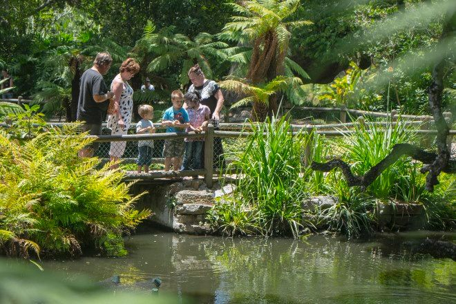 Arderne Gardens Cape Town South Africa