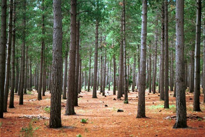 [Image: wc_tokai_forest_trees.jpg]