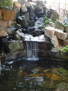 Anthurium lodge durban south africa for Koi ponds durban