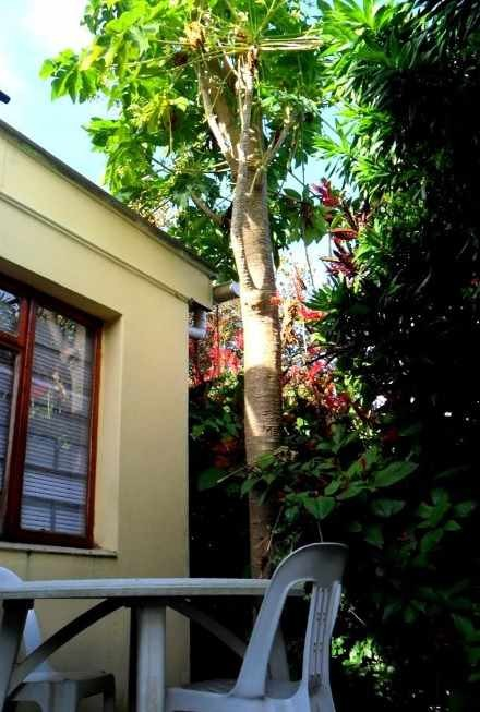 Umkomaas South Africa  city pictures gallery : Casa Mia Guest House, Umkomaas, South Africa