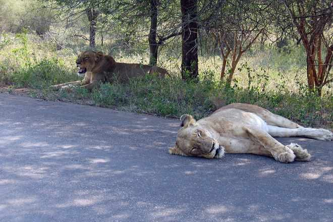 Ga Machete Kruger National Park Kruger National Park