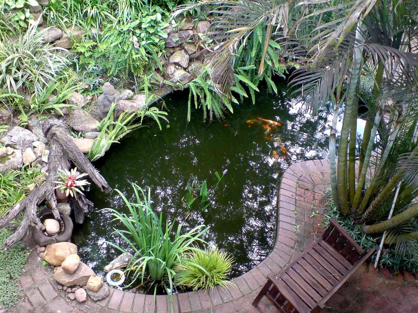 Macnut farm country lodge durban south africa for Koi ponds durban