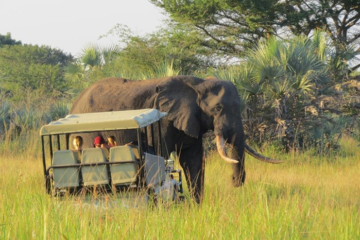 Tembe Elephant Park Tembe Elephant National Park