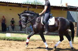 Tierra Pequena B&B and Equestrian Estate Potchefstroom