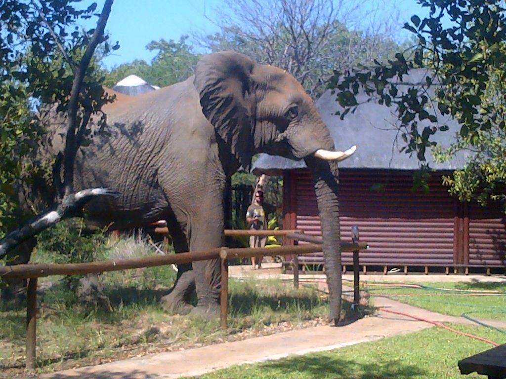 Tsakane Safari Camp Balule Game Reserve South Africa
