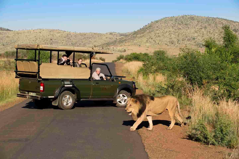 Kết quả hình ảnh cho pilanesberg national park