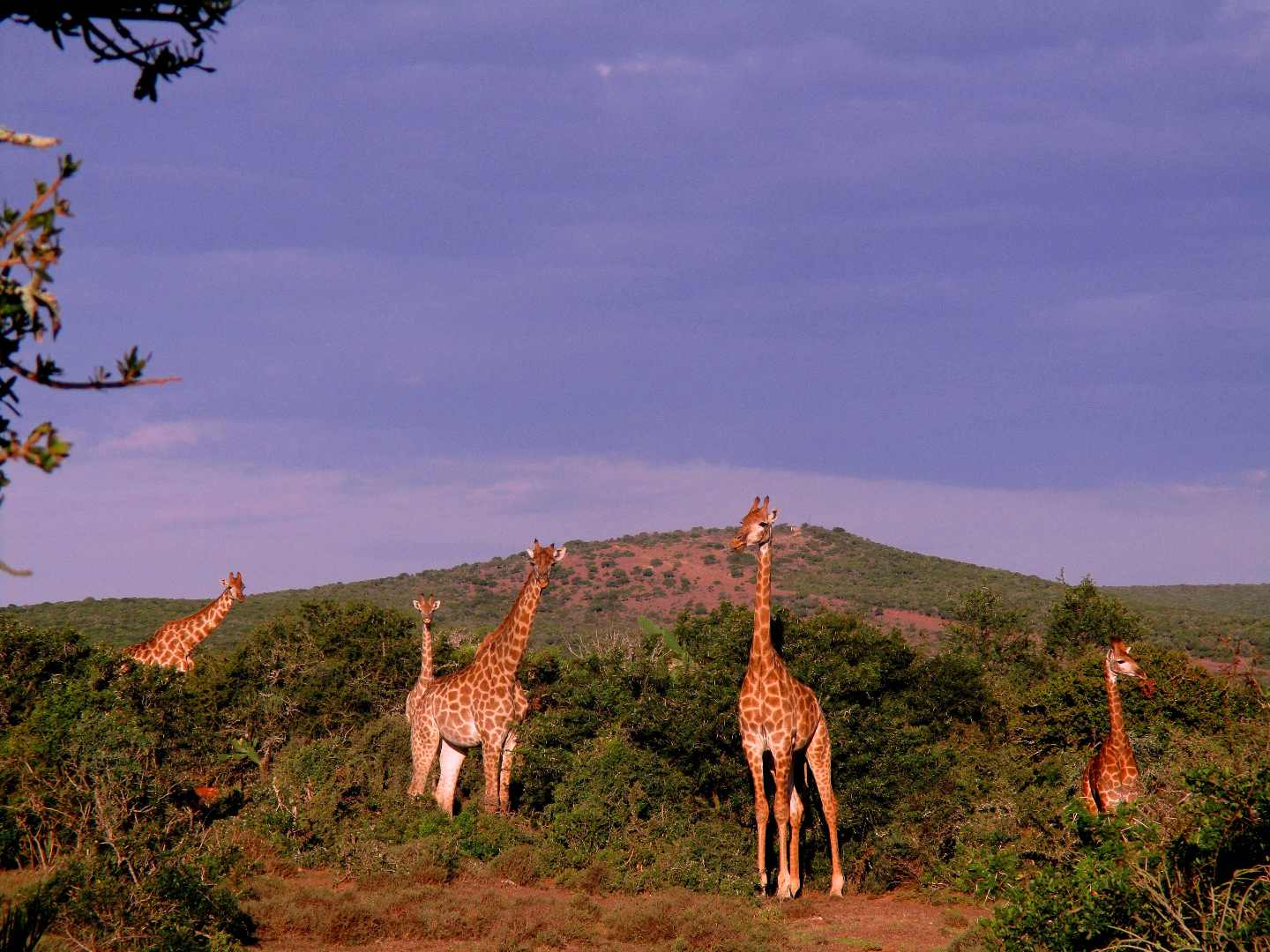 Valley Bushveld Country Lodge Addo South Africa