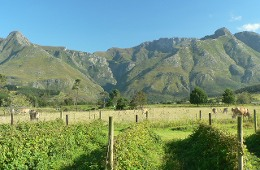 Wildebraam Berry Estate Swellendam